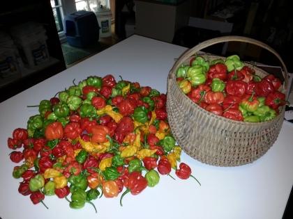 Hab harvest, 2013