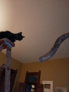 That's an 8' ladder, by the way. Both of our cats love climbing on it anytime we get the thing out.